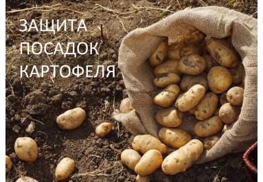 Защита посадок картофеля